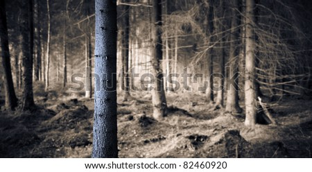 Spooky blue forest with dry trees - stock photo