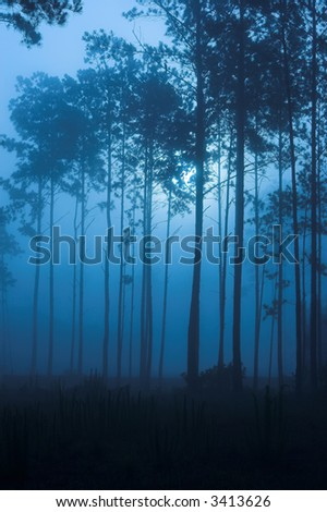 spooky fog filled forest at night - stock photo