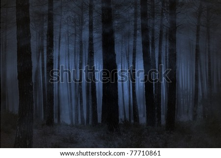 Spooky foggy forest at night - stock photo