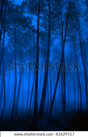 Spooky foggy pine forest at night - stock photo
