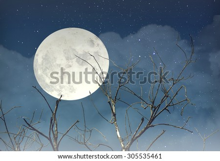 Spooky forest with full moon. Halloween background.  - stock photo