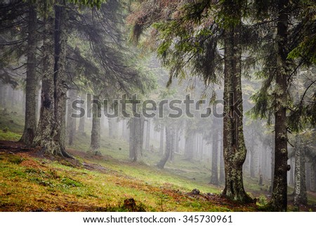 spooky forest with path - stock photo