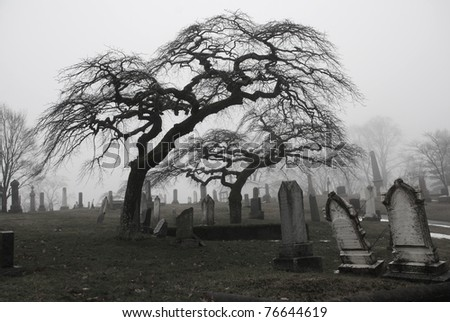 Spooky graveyard scene complete with scary trees and deep fog.  Black and white version. - stock photo