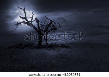 Spooky naked trees against a cloudy sky in a full moon night. Good as halloween background.