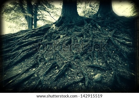 Spooky old analog capture of very old beech tree roots in a Danish forest. - stock photo