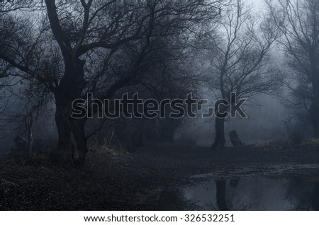Spooky old forest on cold winter day.