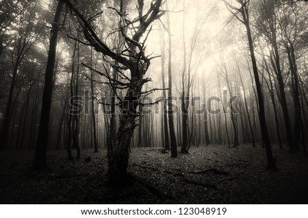 spooky old tree in dark forest - stock photo