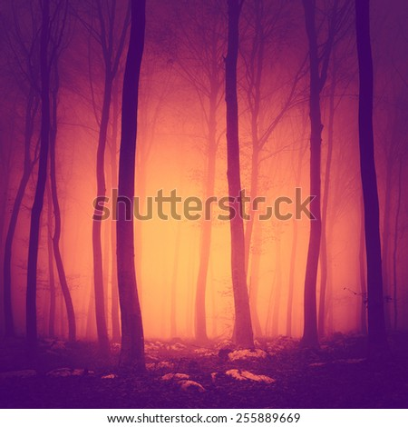 Spooky purple red vintage color forest scene with yellow orange light in background. - stock photo