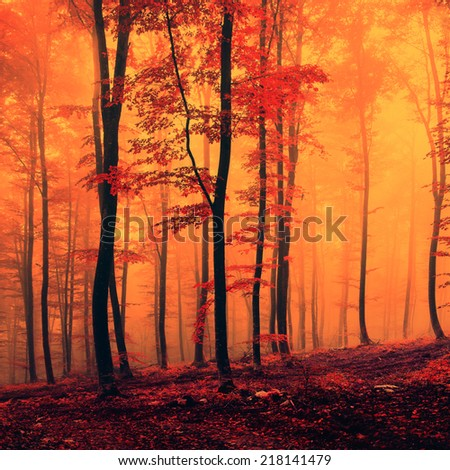 Spooky red over saturated forest scene. Color filter filter effect used. - stock photo