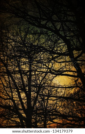 Spooky trees silhouettes. Vintage background - stock photo