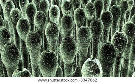 Spores - stock photo