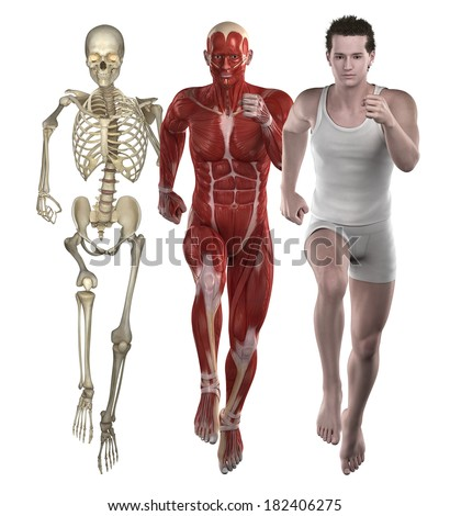 Sport fitness man anatomy. muscles and bones