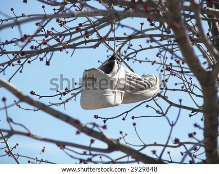 sport shoe hanging on a tree branch - stock photo