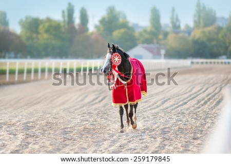 Sport Thoroughbred horse winner walks on a treadmill at the racetrack. She is wearing a red blanket and socket, decoration, prize on the bridle. - stock photo