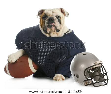 sports hound - english bulldog dressed up like a football player on white background - stock photo