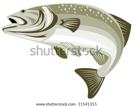 Spotted bass leaping - stock photo
