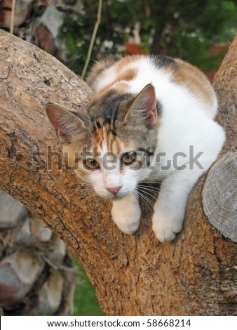 Spotted cat on a tree - stock photo