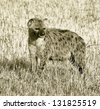Spotted Hyena on Masai Mara National Reserve, Kenya (stylized retro) - stock photo