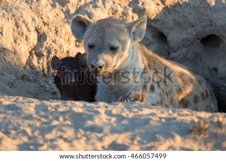 Spotted Hyena with baby