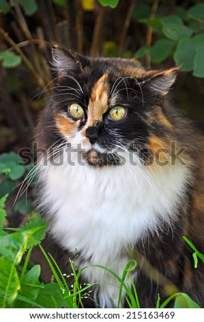 spotted multicolor cat face close up - stock photo