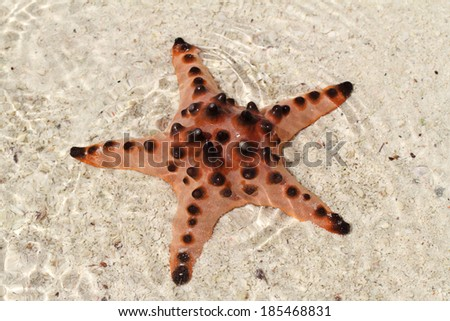 Spotted starfish in a shallow water - stock photo
