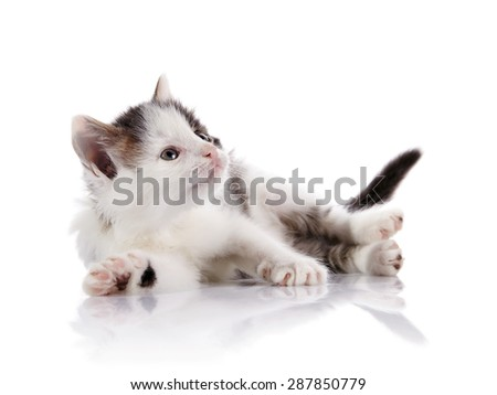 Spotty curious kitten on a white background. - stock photo