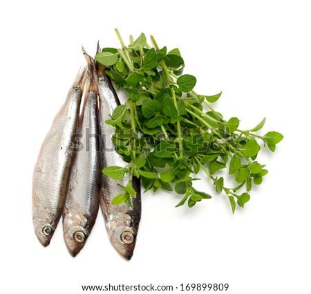 sprat fish and marjoram isolated on white background - stock photo