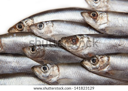 Sprats (Sprattus sprattus) a small oily fish isolated on a white background
