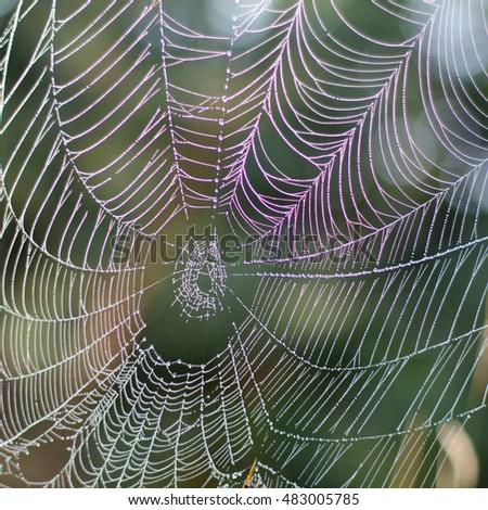 sprawling spider web with dewdrops after a morning fog / is wet forest network