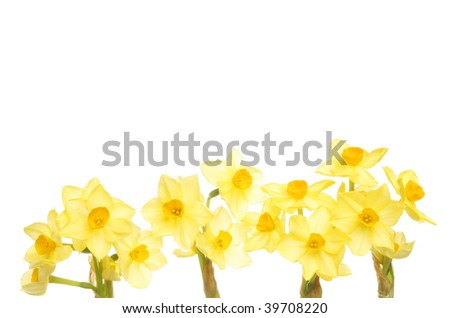 Spray of daffodils with copy space above