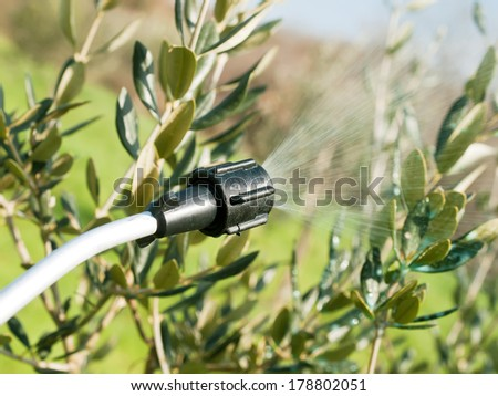 spraying olive trees in winter time - stock photo
