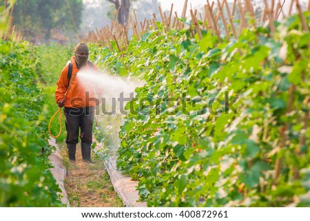 spraying pesticide in cantaloupe garden - stock photo