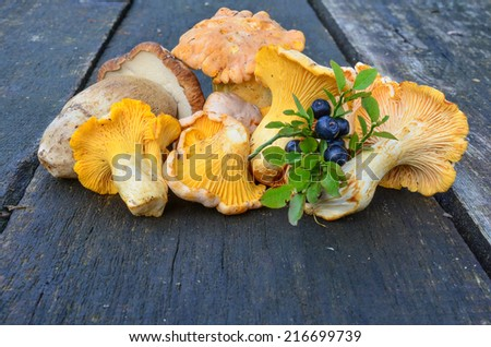 Sprig of blueberries and wild mushrooms, Chanterelles and Cep on the old, oak table, close up view - stock photo