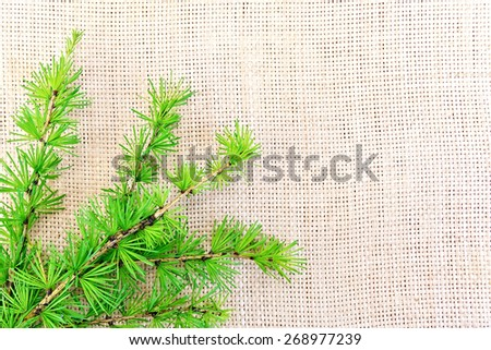 Sprig of fir with green needles on the background of coarse cloth of burlap - stock photo
