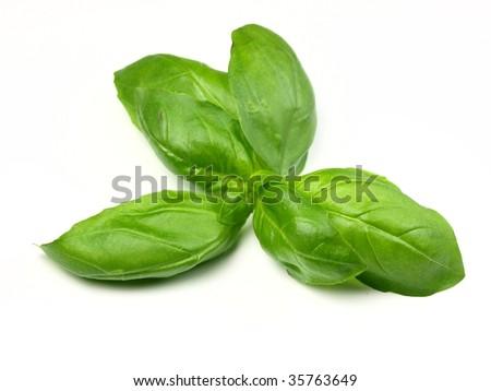 sprig of fresh basil - stock photo