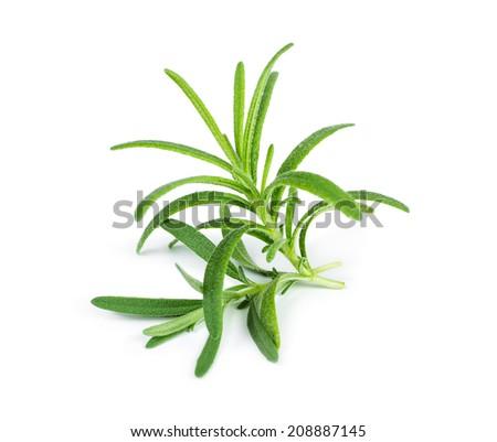 Sprig of fresh rosemary isolated on white background - stock photo