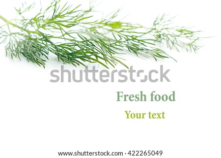 Sprig of green dill on a white background. Frame with copy space for text. Isolated, studio, close-up
