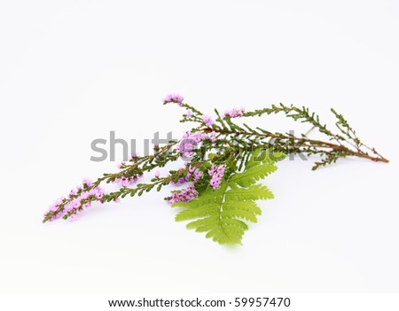 Sprig of heather and fern - stock photo