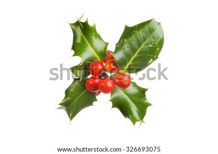 Sprig of holly with ripe red berries isolated against white - stock photo