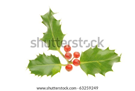Sprig of holly with three leaves and five ripe red berries - stock photo