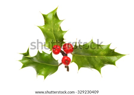 Sprig of Holly with three leaves and three ripe berries isolated against white - stock photo