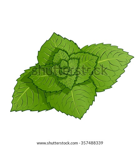 Sprig of mint. Isolated on white background. Stock illustration.
