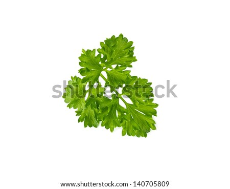 Sprig of parsley isolated on white background - stock photo