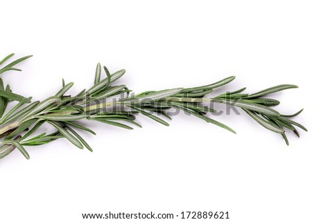 Sprig of rosemary. Isolated on a white background. - stock photo