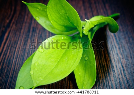 Sprig with beautiful lush green leaves and drops of water on a wooden background - stock photo