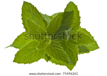 sprigs of fresh mint on a white background