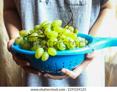 sprigs of green grapes in a colander in the hands, raw fruits - stock photo