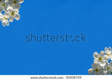 Sprigs of pear on a background blue sky - stock photo