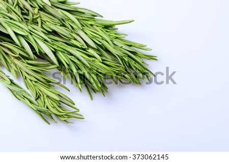 sprigs of rosemary on a white background