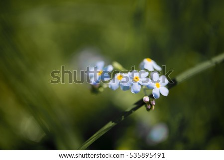 Spring abstract background with meadow flowers